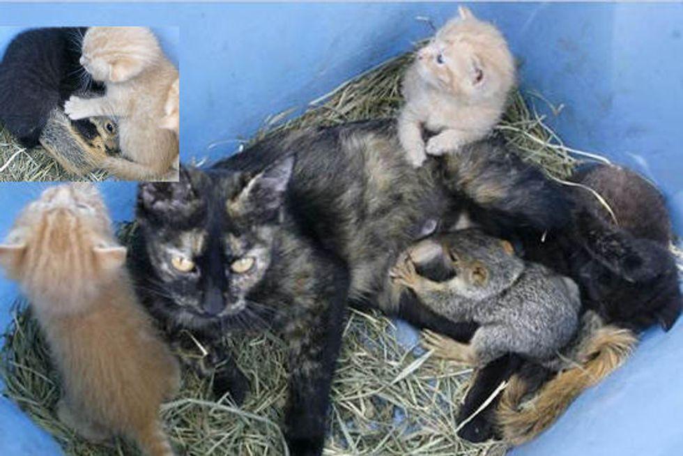 Cat Adopts Baby Squirrel