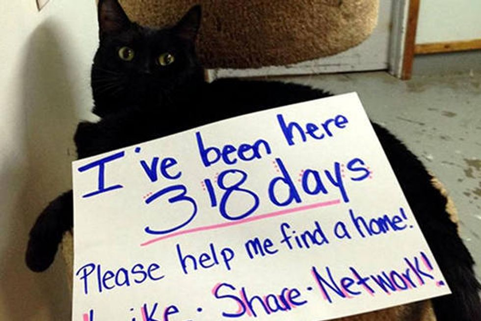 9 Year Old Cat Gets Help On Facebook To Find A Home