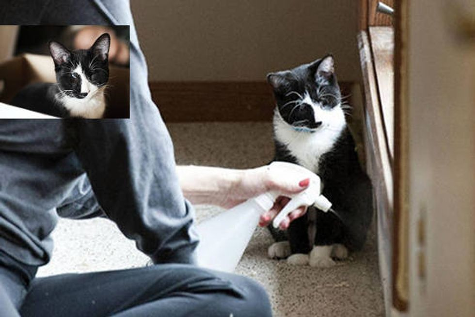 Kitty Born Blind Uses Other Senses To Help Him See