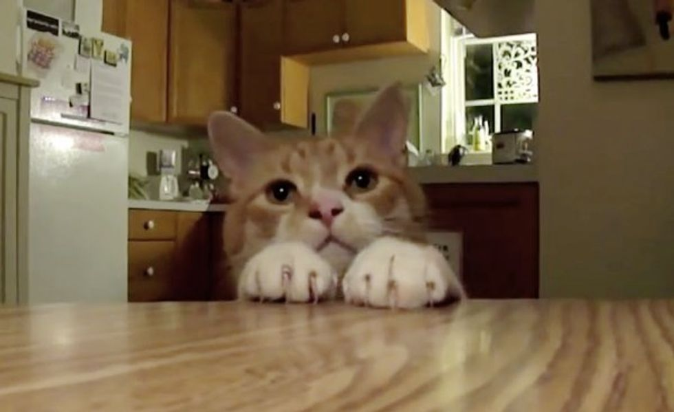 This Cat Keeps All the Treats off the Table! Look at Those Ninja Paws!