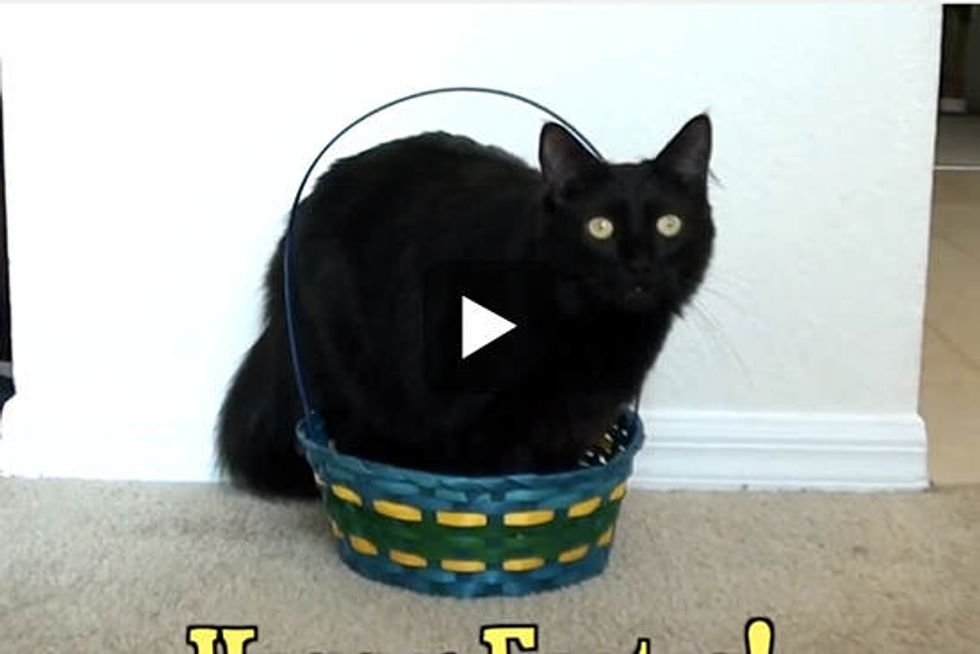 5 Signs Your Cat is a Rabbit