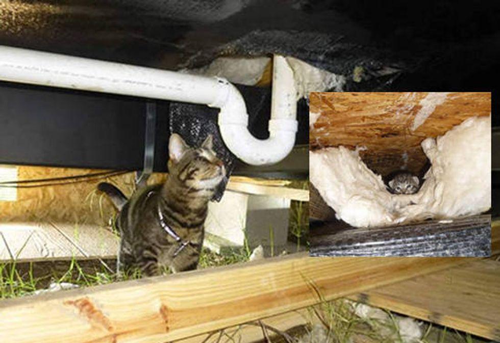 Spirit The Blind Cat Helps Rescue Kittens