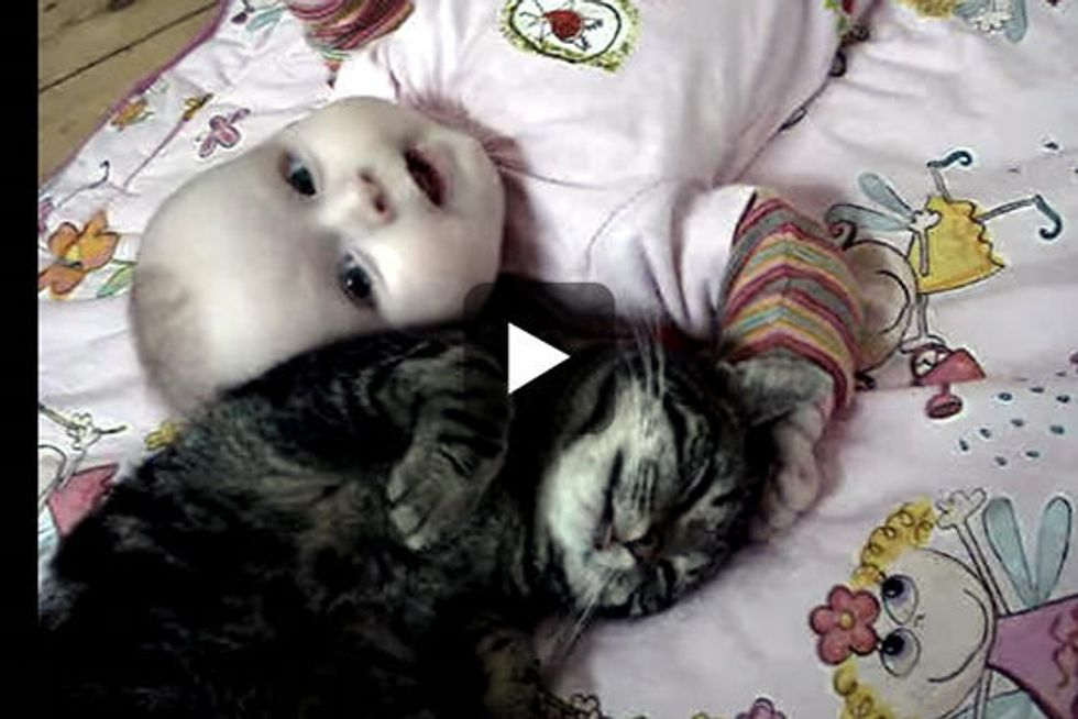 Cat And Baby Love Each Other