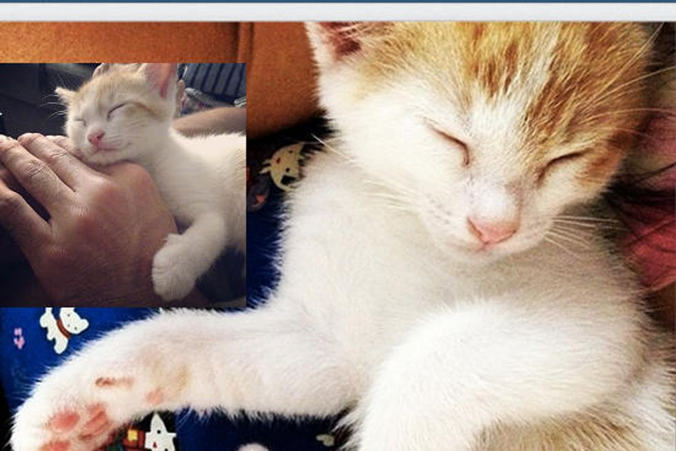 Kitten Found In Elementary School Got A Second Chance