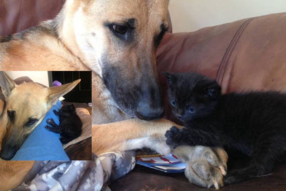 Dog Produces Milk For Rescue Orphan Kitten