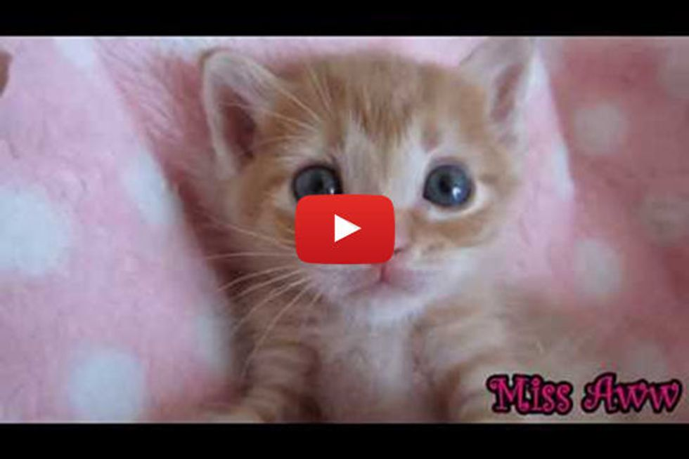 Kitten Playing And Sleeping