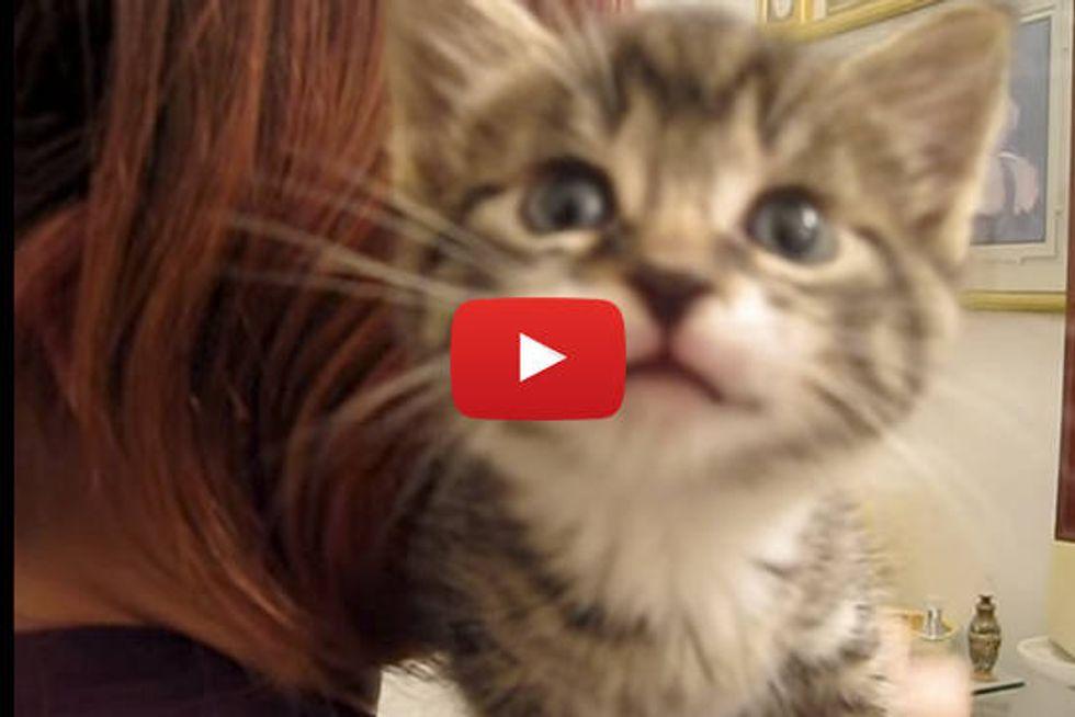 Tiny Talking Kitten