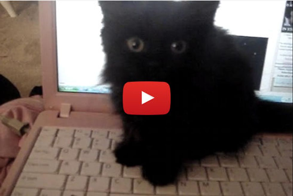 Kitten Typing On Keyboard