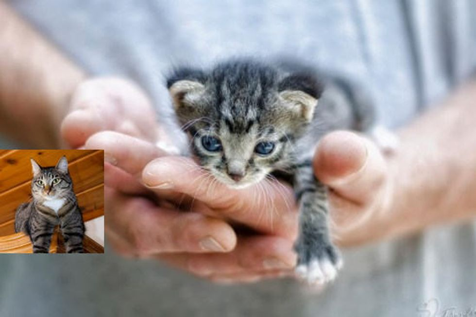 Kitten Saved From Being Trapped In Pile Of Old Wood And Cowebs