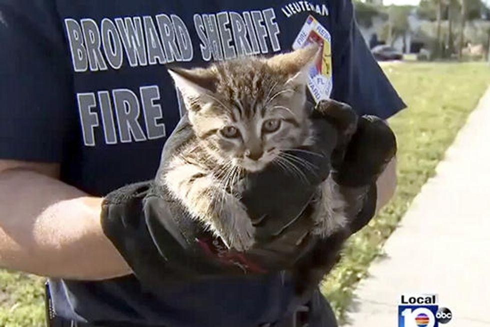 Stormy The Cat Saved By Firefighters