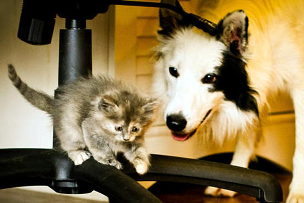 Isis The Tortie Cat And Her Dog Nanny