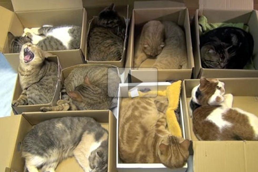 Organize 9 Cats - Kitties' Way