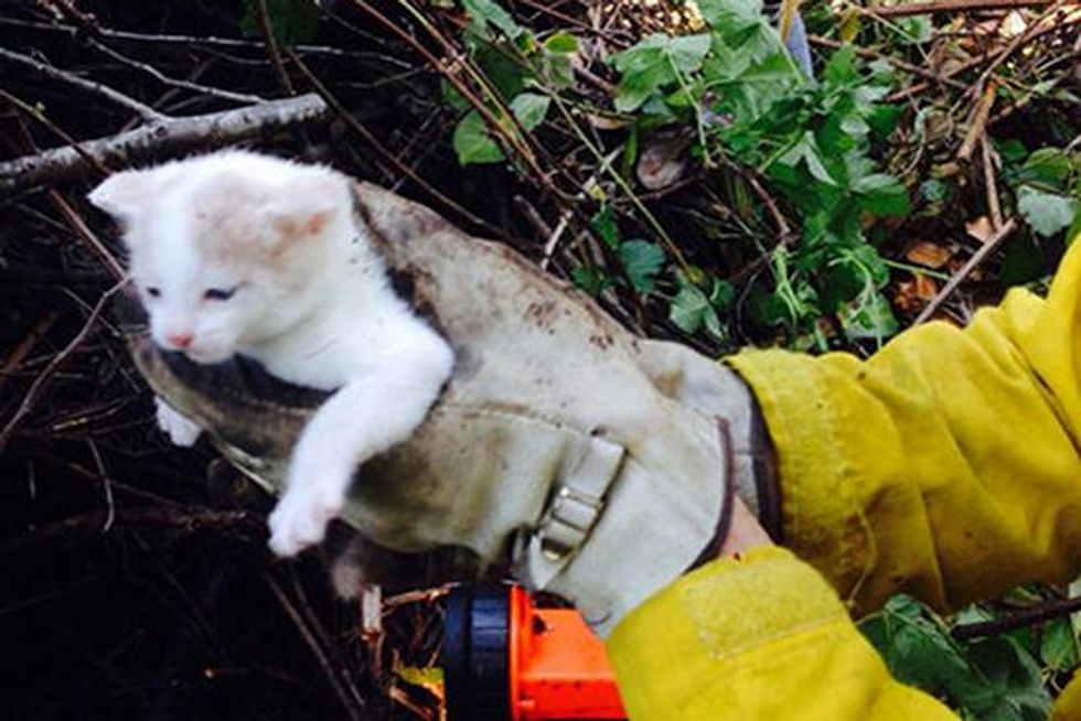 Firefighter Adopts Kitten He Rescued From Yard Debris Pile