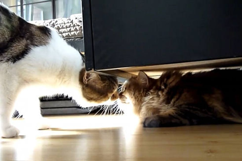 Rocky The Cat Meets Furry Visitors