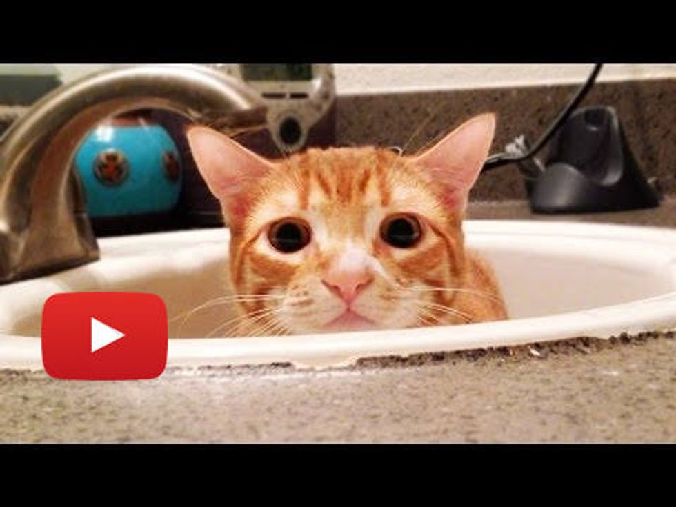 A Cat's Guide to Bathrooms