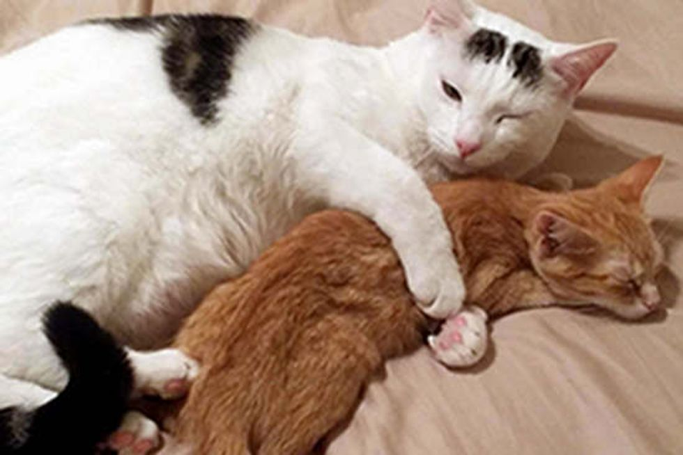 Rescue Kitten Discovers Hugs
