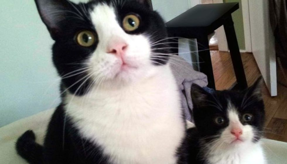 Adopted Cat Finds His Mini Me