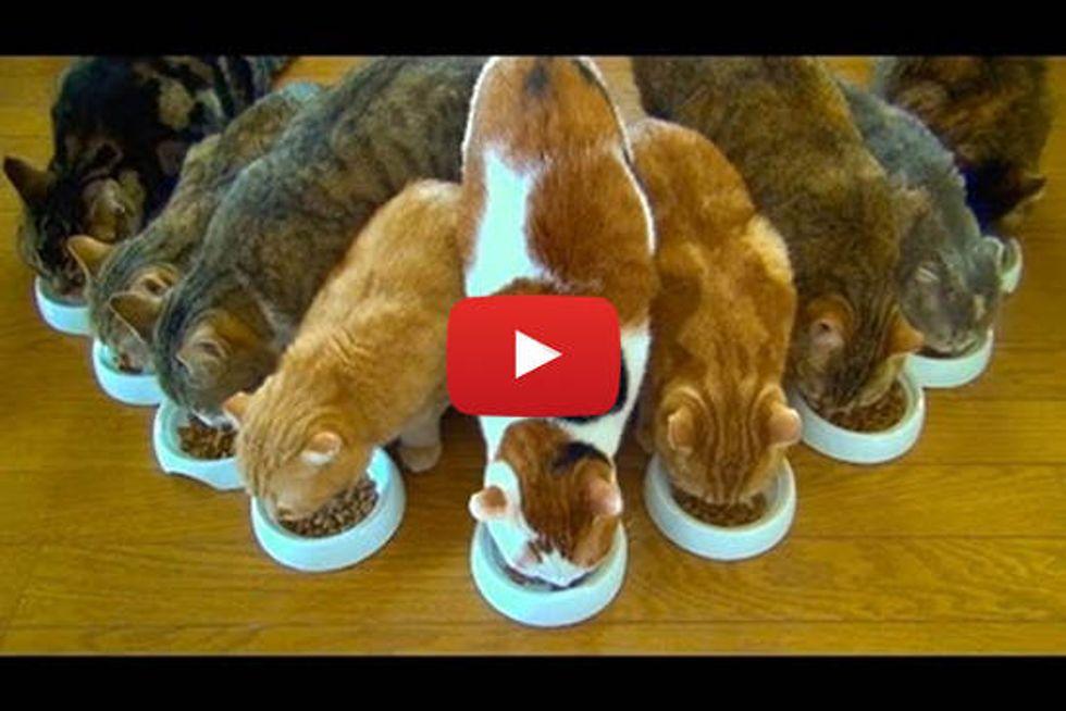 9 Cats: Breakfast Is Ready!