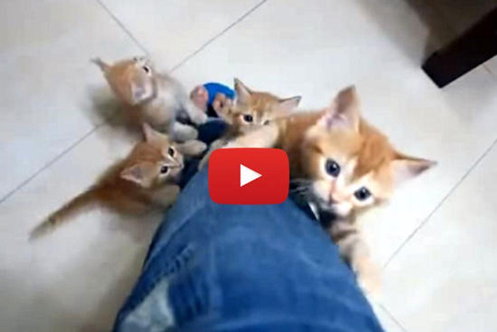 Little Leg Climbing Kittens