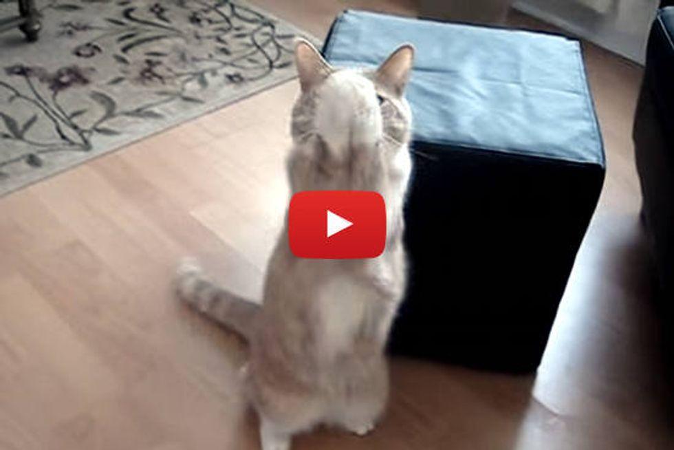 Mooch The Treat CATcher