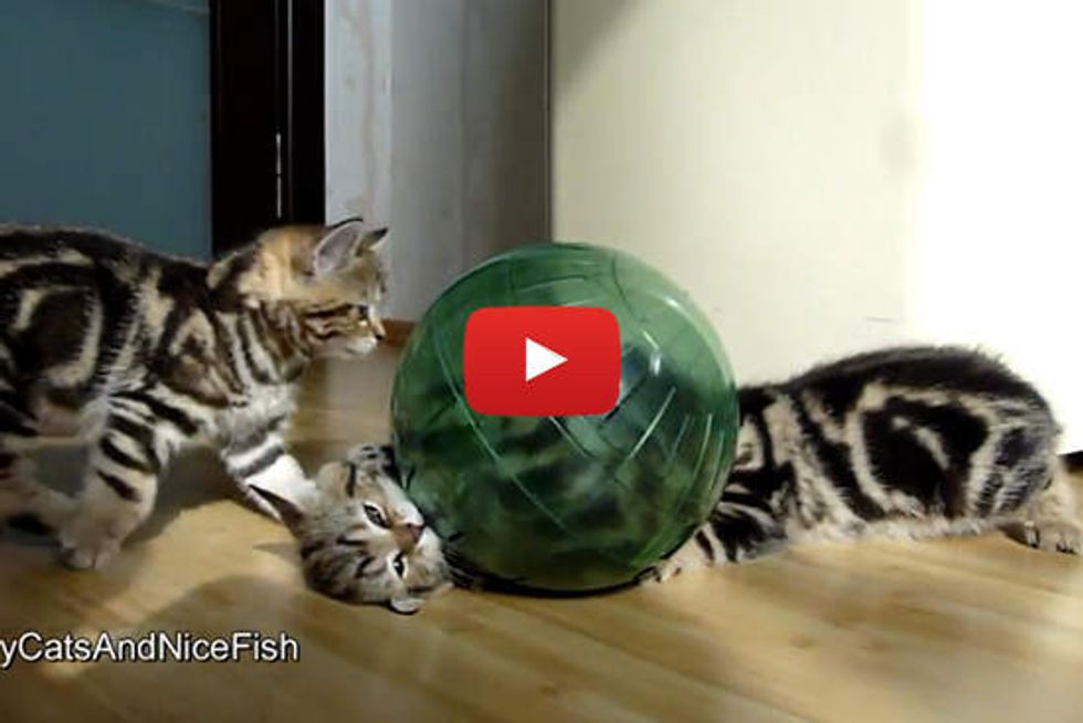 Kitty Hamster Ball adventures