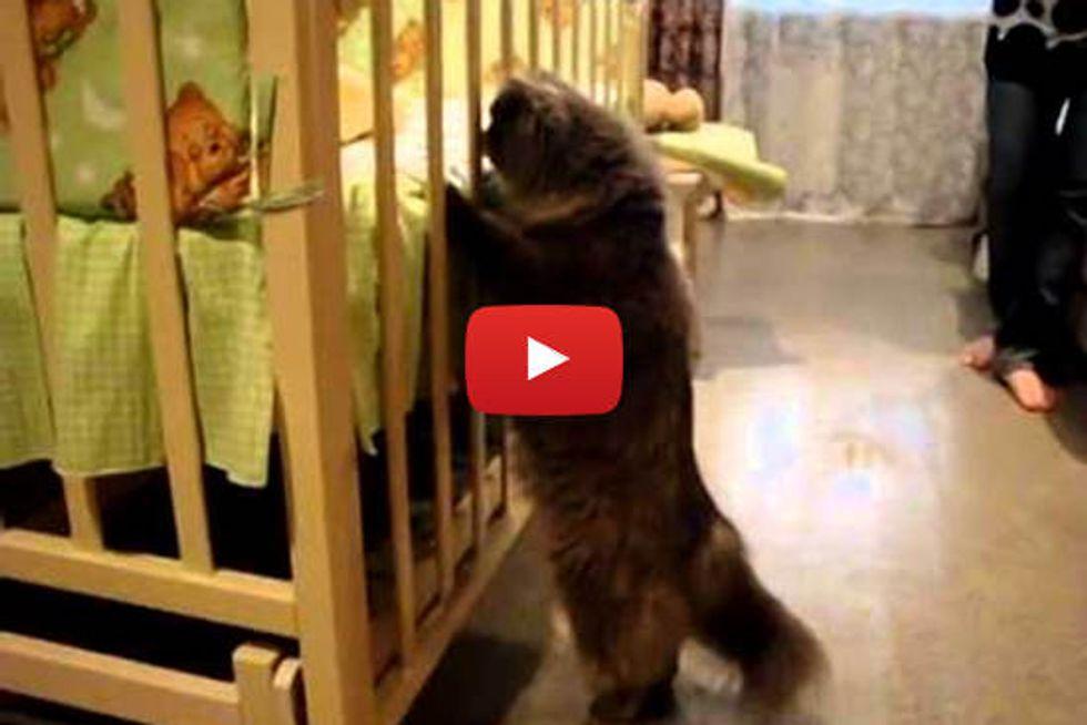 Cat Meets His Little Human