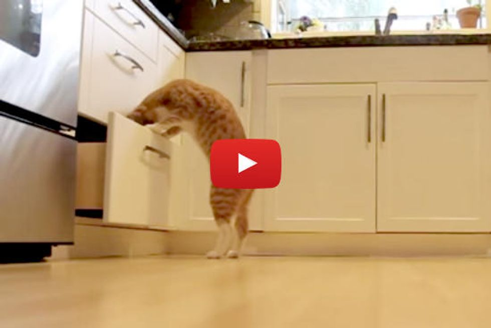 Kitty Finds Catnip