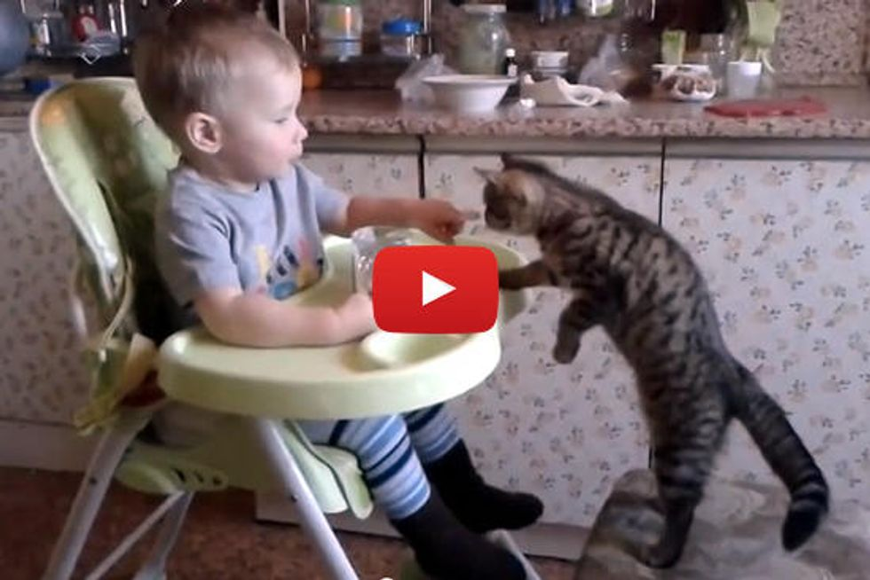 Baby Feeds His Kitten