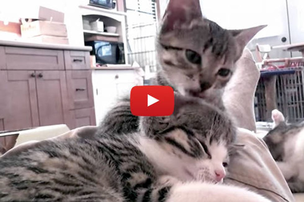 The Joys Of Fostering Rescued Cats And Kittens