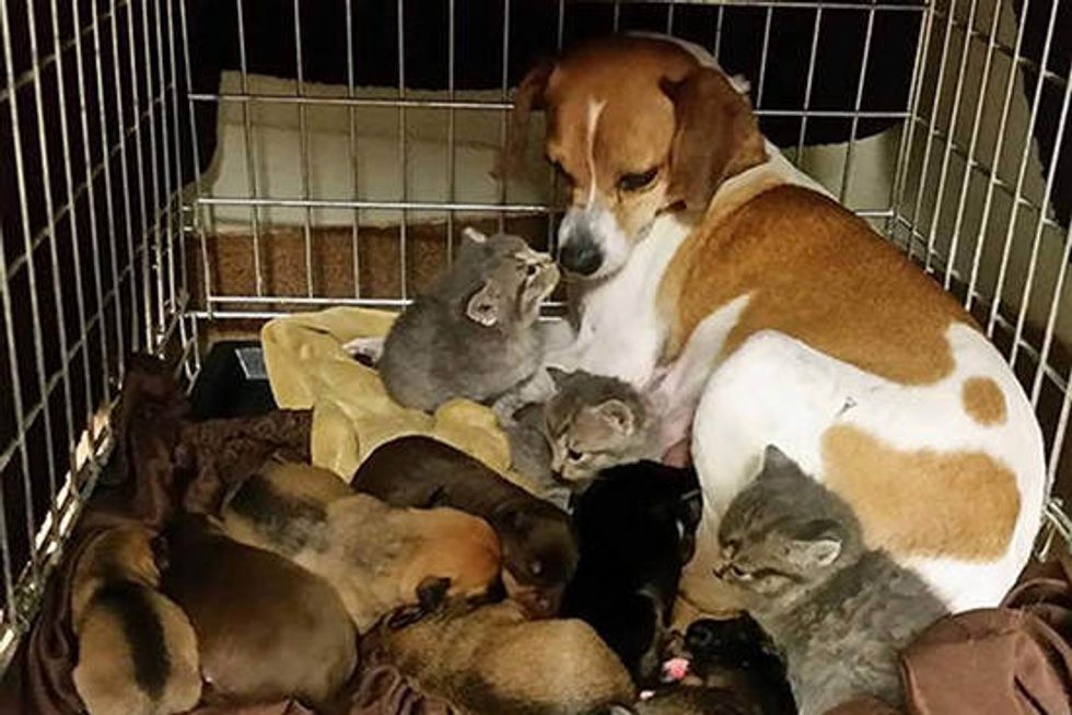 Rescue Kittens Find Unusual Mom