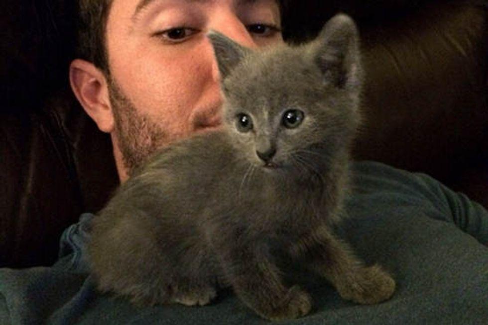 Penny The Kitten Rescued Twice