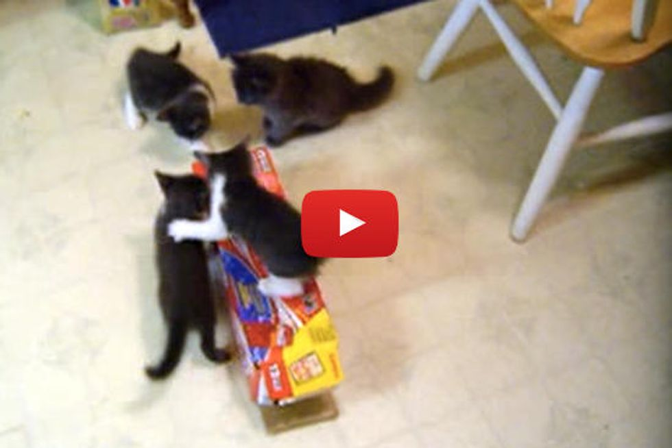 Kitten Box Attack!