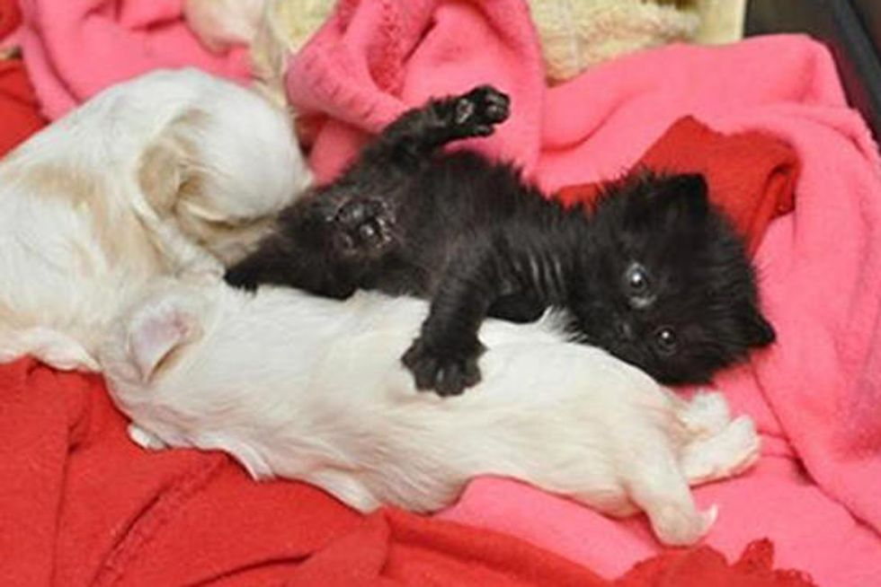 Orphan Kitten Adopted By Maltese Shelter Dog
