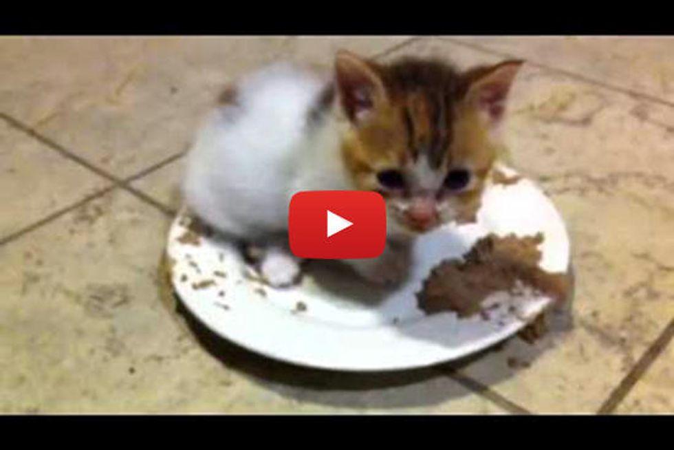 Tiny Kitten Purring In Food