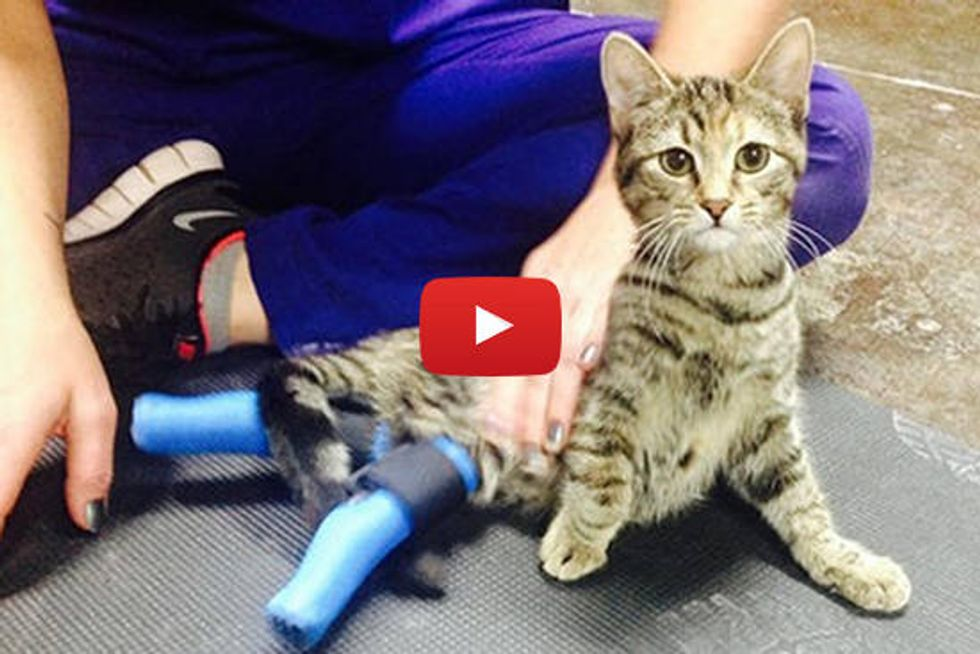 Boots The Ninja Cat With Only Two Paws