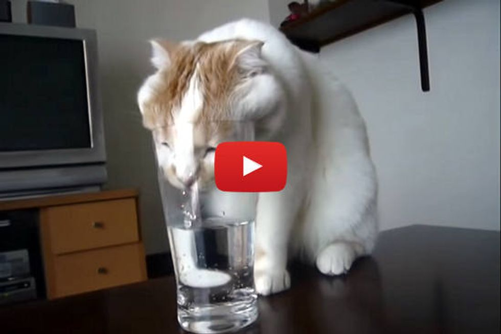 Drinking From His Human's Glass