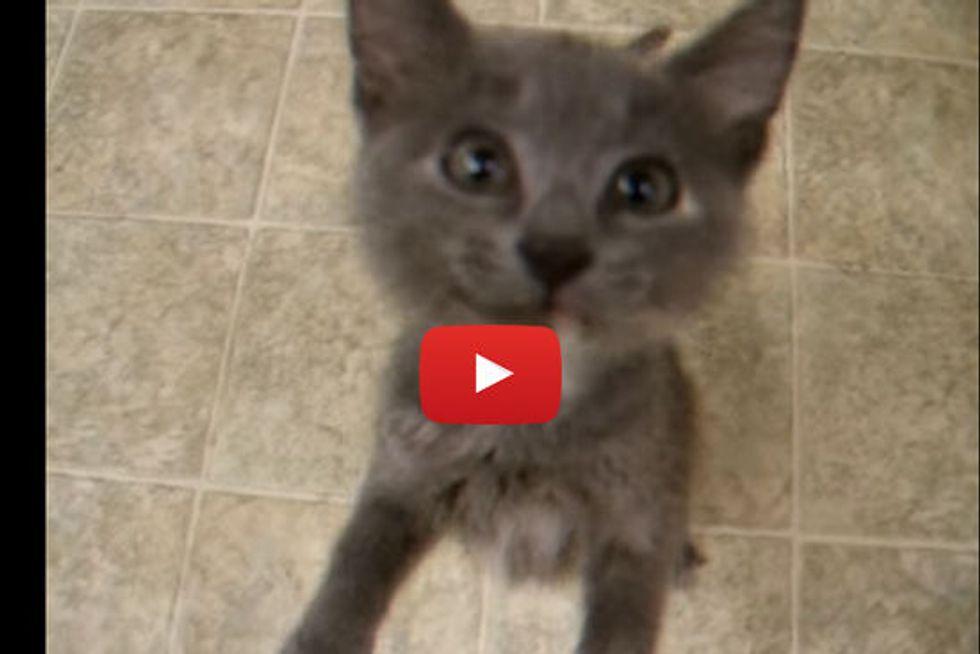 Kitten Sounds Like A Squeaking Door