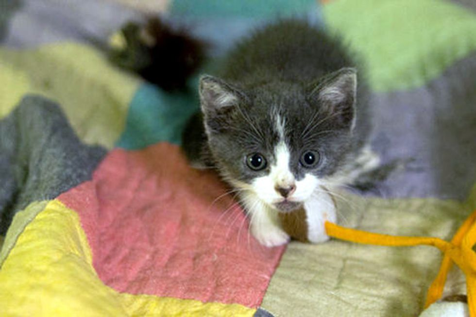Kitten Rescued From Middle Of Street