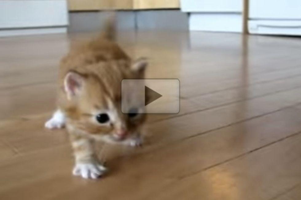 Kitten Practices Walking