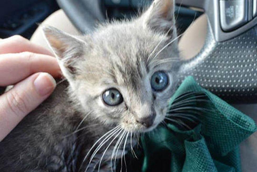 Team Of Good Samaritans Save Kitten From Storm Drain
