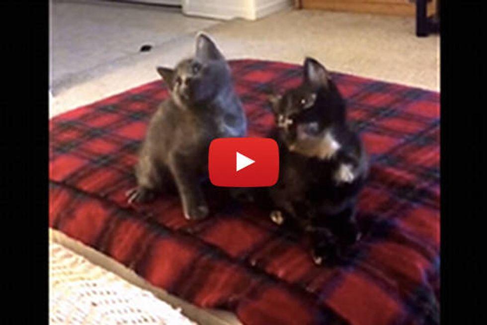 Kitten Dancing - Turn Down For What