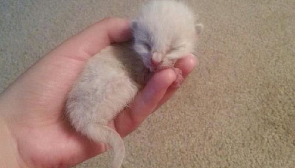 Orphaned Kitten Rescued from Highway, Then And Now