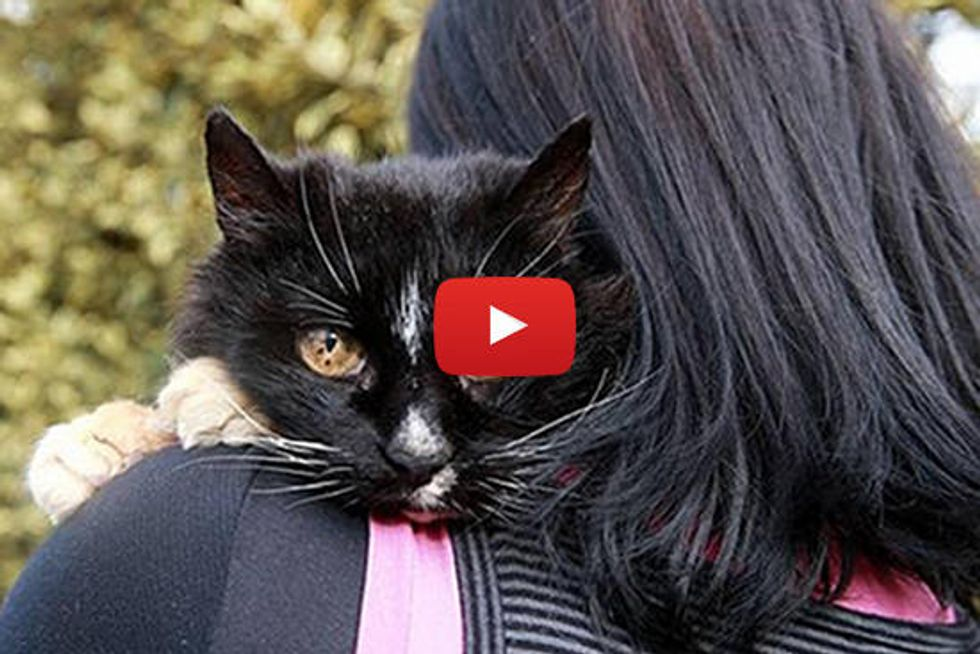 Missing Cat's Miracle Return After 13 Years