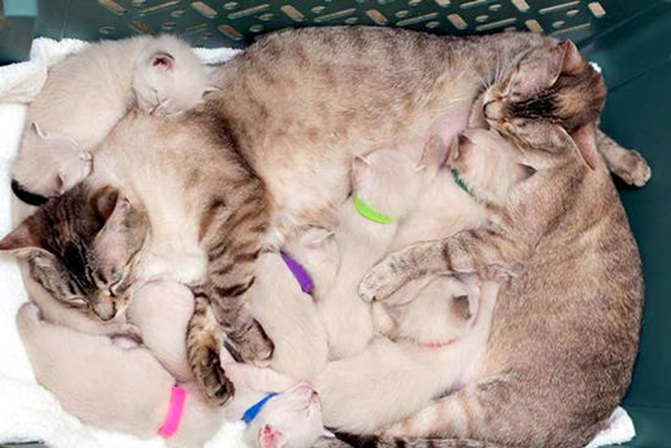 Two Rescue Cat Moms Raise Eight Kittens & Five Orphans Together. Happy Family of 15!