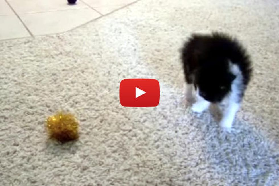 Kitten Tries To Intimidate The Ball
