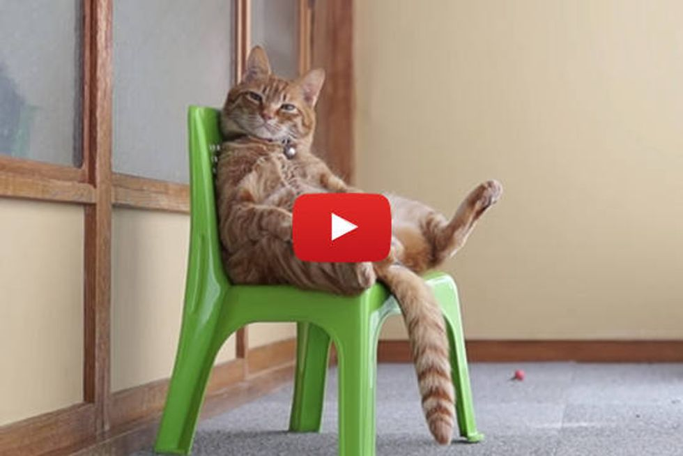 Cat Sitting In A Chair