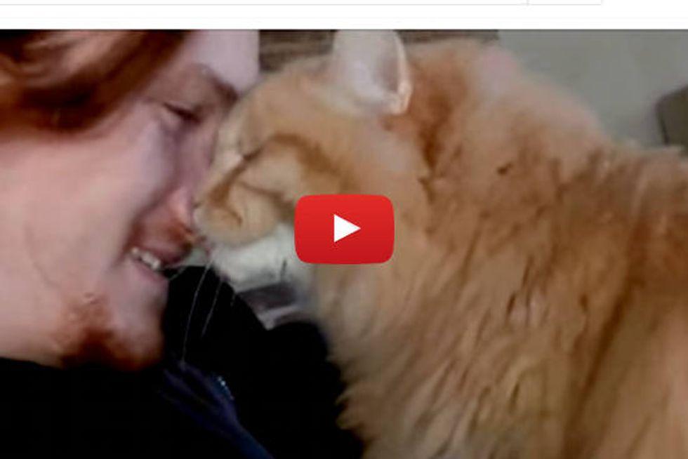 Max The Siberian Cat Loves His Human Dad