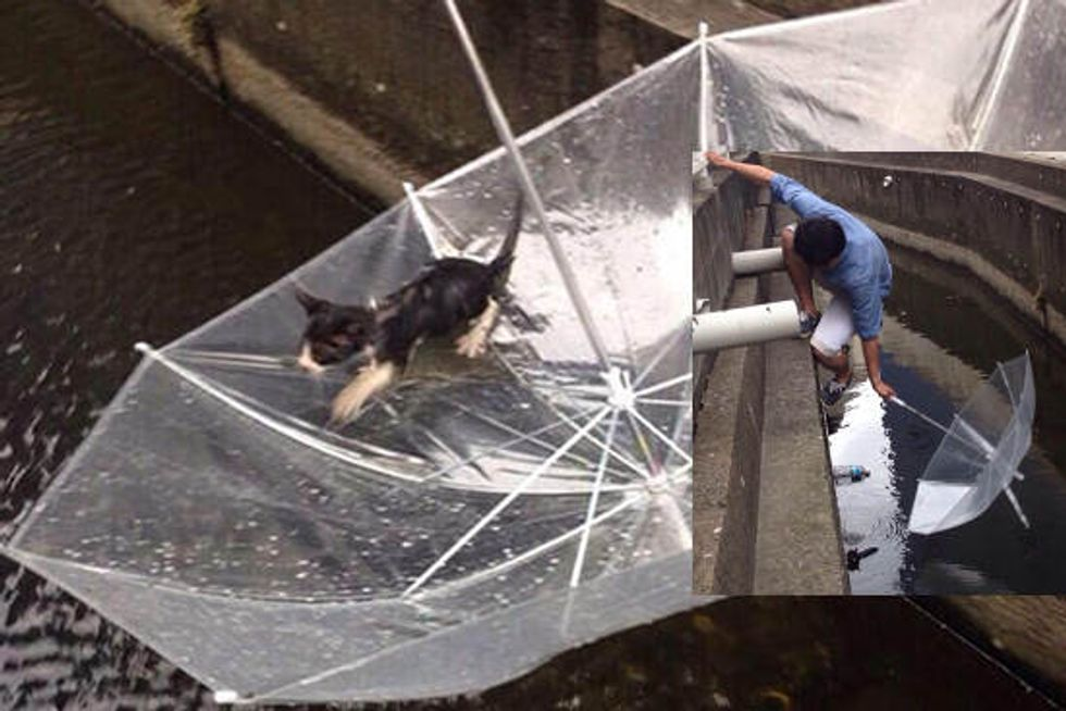 Heroic Rescue: Young Man Saves Kitten From Roadside Canal