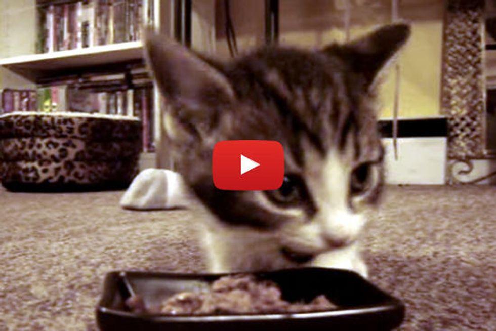 Kitty says 'Yum Yum Yum'