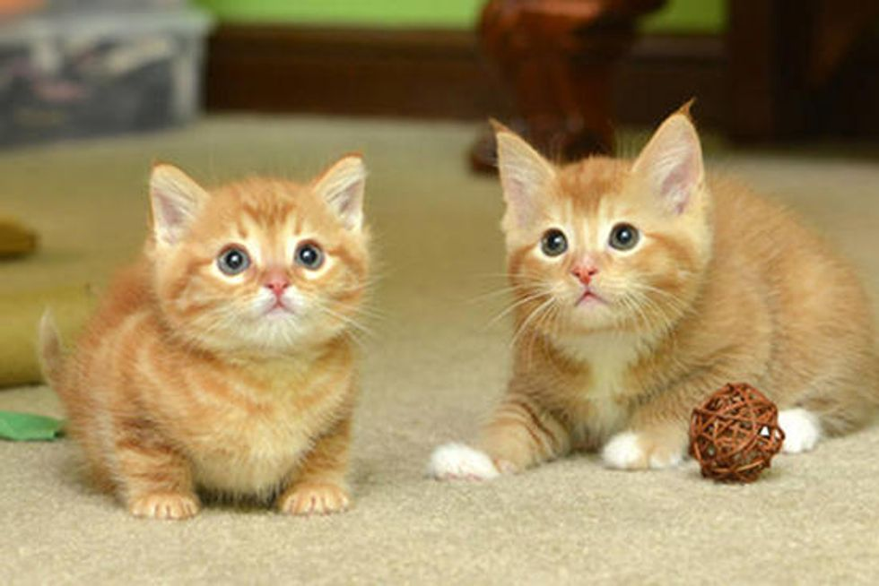Ginger Family Gets A Second Chance At Life